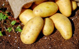 Шашлык из картошки с беконом